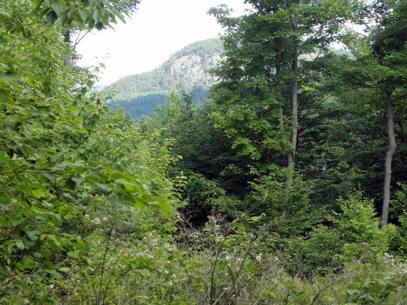 Alden Forest : Warrensburg : Warren County : New York
