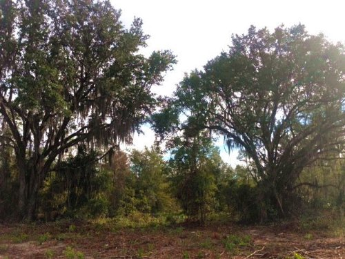 135 Acres On Boots Harrison Road : Hortense : Brantley County : Georgia