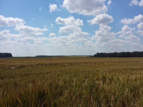 125/Acre Cash Lease In Place : Palestine : Saint Francis County : Arkansas