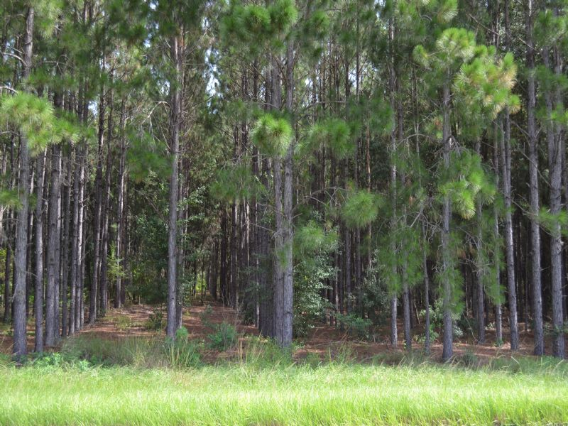 Clermont Lakefront 84 Acres : Clermont : Lake County : Florida