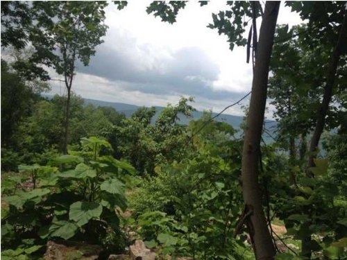 715+/- Acres Foreclosed Property : South Pittsburg : Marion County : Tennessee