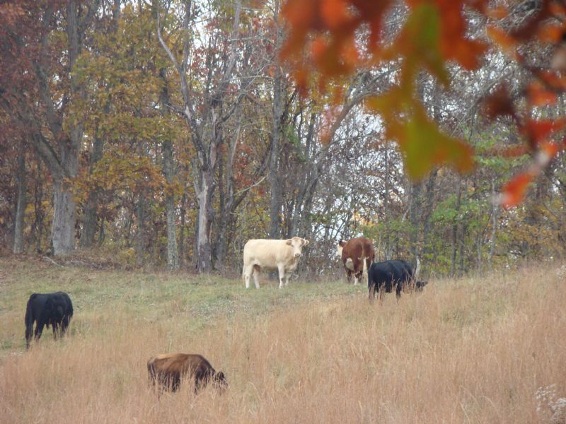 Prime Hunting, Farm & Timberland : Barboursville : Cabell County : West Virginia