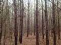 Riderville Tract : Plantersville : Chilton County : Alabama