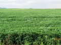 High Caliber Farm Land