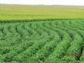 1200 Acre Choice Farm & Grass Land