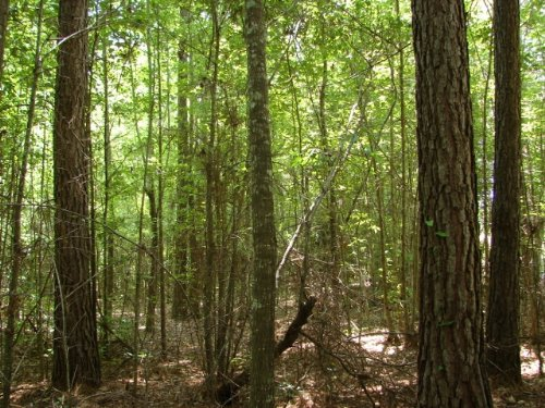 Hunting And Homesite : Rockford : Coosa County : Alabama