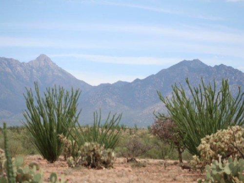 Canoa Preserve : Green Valley : Santa Cruz County : Arizona