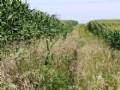 160 Farm And Recreational Land