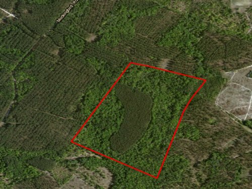 62+/- Acres Mockingbird Lane : Millen : Jenkins County : Georgia
