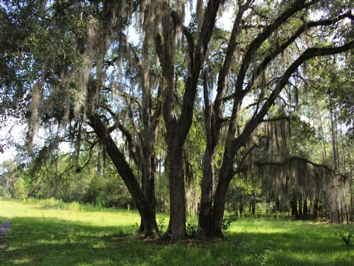 2979 Acres : Other : Flagler County : Florida