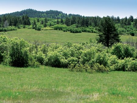 The Pines At Statter Ranch : Larkspur : Douglas County : Colorado