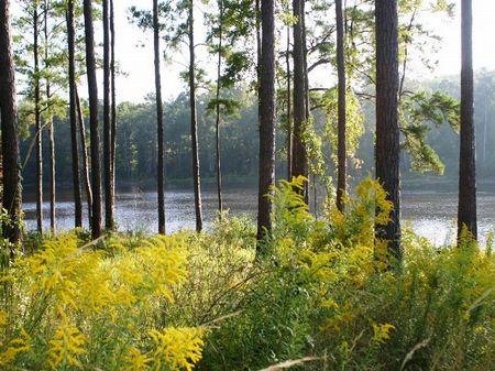 El Consuelo Plantation : Quincy : Gadsden County : Florida