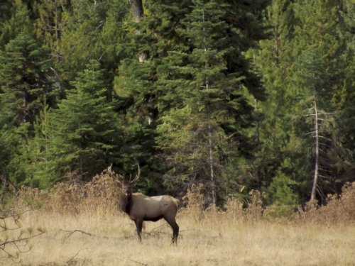 Whiskey Creek Hunting Grounds : Wallowa : Oregon