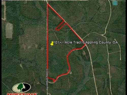 Timber Land For Sale Tract 6 : Baxley : Appling County : Georgia