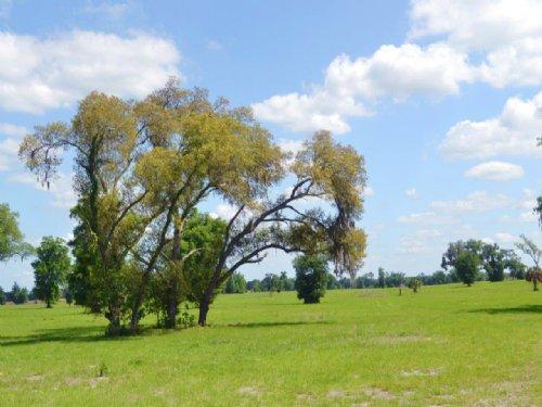 Equestrian Ranch : Morriston : Levy County : Florida
