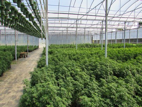 54 Ac & 160,000 Sqft Of Greenhouse : Umatilla : Lake County : Florida