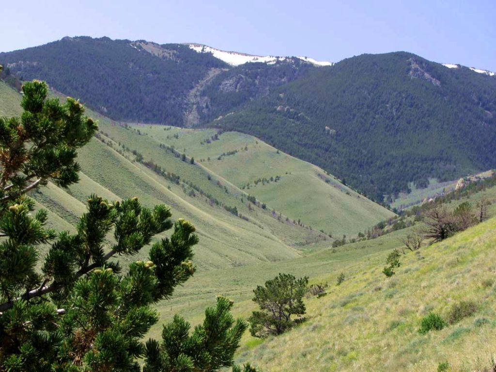 20 Acres Bordering National Forest : Belfry : Carbon County : Montana