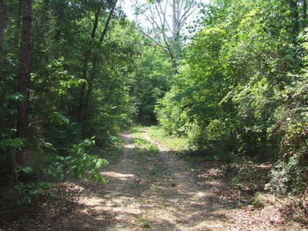 120 Acres Of Deer, Turkey, And Duck : Jones : Autauga County : Alabama