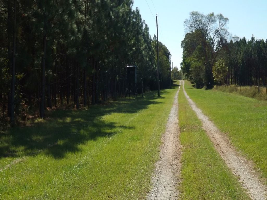 440 Acre Wildlife Sanctuary : Bluffton : Clay County : Georgia