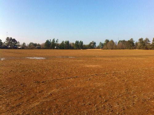299 Acres : Brinkley : Monroe County : Arkansas