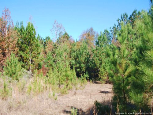 32 Ac Hunting Tract In Poplarville : Poplarville : Pearl River County : Mississippi
