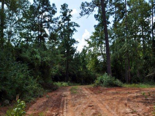 132 Acres Snell Road : Livingston : Polk County : Texas