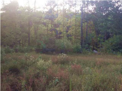 150+/- Acres Fantastic Hunting : South Pittsburg : Marion County : Tennessee