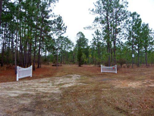 47 Acres Bank Owned : Hortense : Brantley County : Georgia