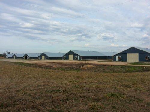 6 House Broiler Farm : Centre : Cherokee County : Alabama