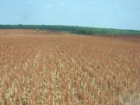 1,225 Acre Farm : Clarksville : Red River County : Texas