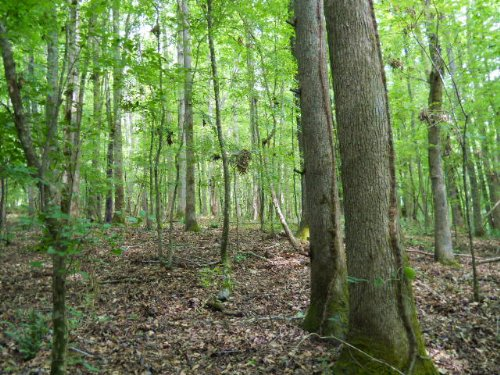 122.35 Ac Old West Point Road : Lagrange : Troup County : Georgia