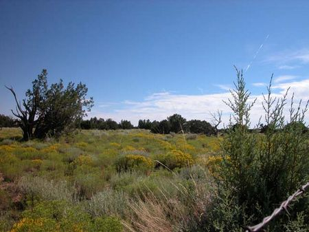 40 Acres Prime Ranch Land Sale : Holbrook : Navajo County : Arizona