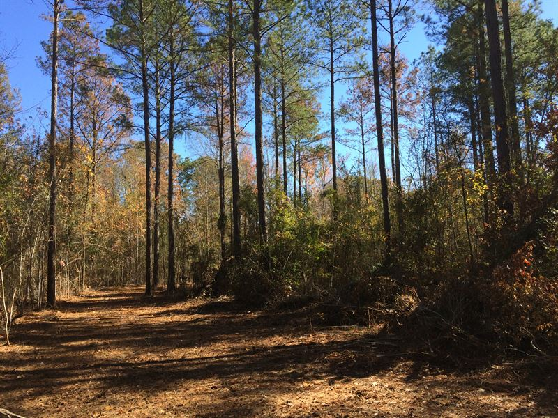 The Jones Tract : Camden : Wilcox County : Alabama