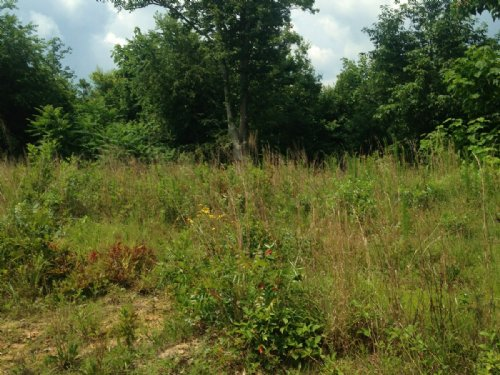 251+/- Acres Hunting Land : Sequatchie : Marion County : Tennessee