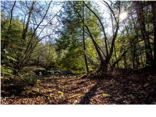 38+/- Acres Hunting Property : Suck Creek : Marion County : Tennessee