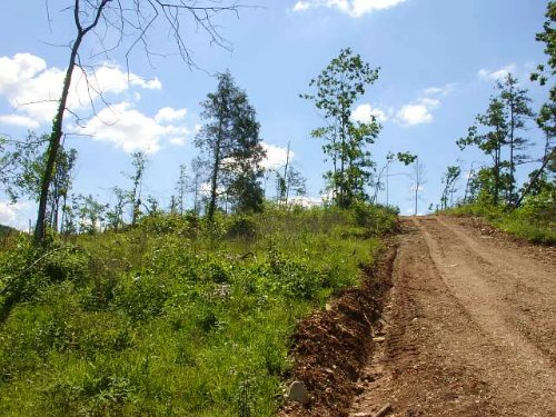 20.35 Acres Antler Ridge : Salem : Shannon County : Missouri