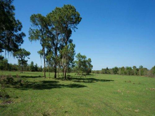 Cox Road Ranchette : Bartow : Polk County : Florida