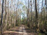 Lost Swamp : Richmond Hill : Bryan County : Georgia