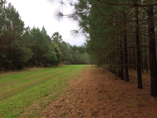 Bryant Hill Sportsman Tract : Marshallville : Macon County : Georgia