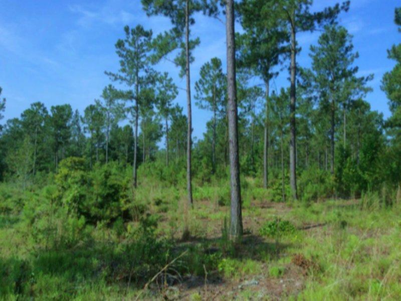 14.01 Acres - Camden, Sc : Camden : Kershaw County : South Carolina