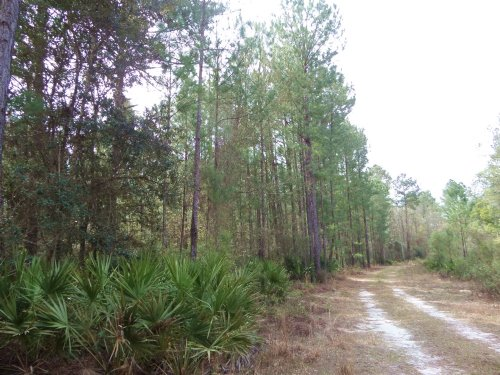 Hunting 47 Acres On Blue Lake Cir : Blackshear : Pierce County : Georgia
