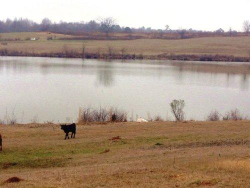 80+/- Ac With A 22+/- Ac Lake : Troy : Pike County : Alabama