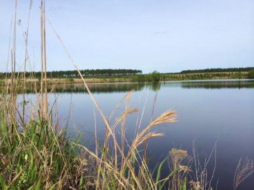 Timber Investment, Hunting, Fishing : Soperton : Treutlen County : Georgia