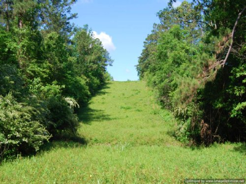50 Acres Priced To Sell : Poplarville : Pearl River County : Mississippi