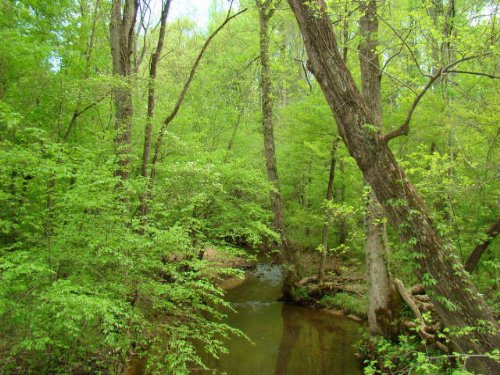 Mill Pond Acres : Dillwyn : Buckingham County : Virginia