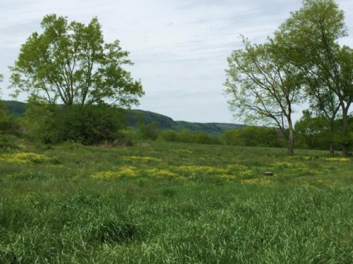 50+/- Pasture Land With Barn : Whitwell : Marion County : Tennessee