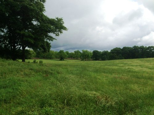 40 +/- Acres With Pecan Orchard : Brundidge : Pike County : Alabama