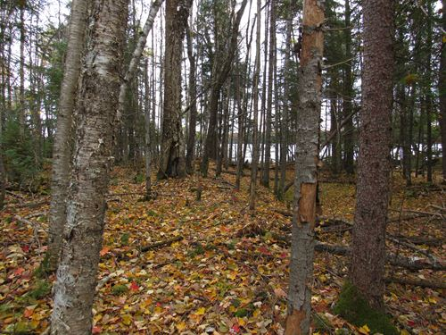 Lot 4 Wizard Rd, Mls 1110672 : Watersmeet : Gogebic County : Michigan