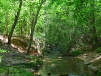 94 Acre Wooded Tract On Creek : Chesnee : Spartanburg County : South Carolina