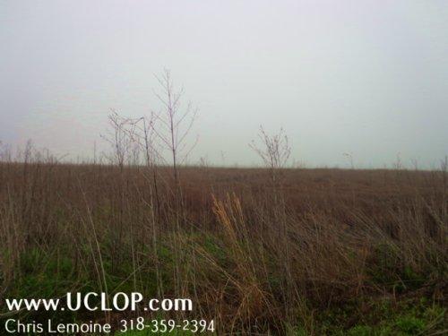 Duck & Trophy Deer Hunting Property : Bentley : Grant Parish : Louisiana
